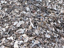 Wood chips from deciduous trees